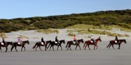 Horse Riding - Cape Farewell Horse Treks - Everything New Zealand