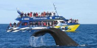 Whale Watch - Everything New Zealand