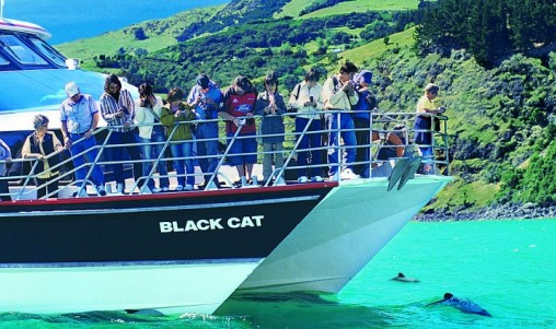 Akaroa Harbour Nature Cruise - Christchurch