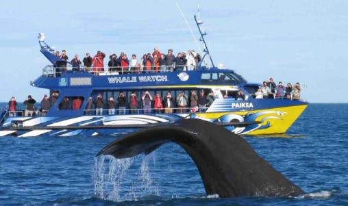 Whale Watch - Kaikoura