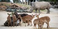 Auckland Zoo - Te Wao Nui - The Living Realm image 10