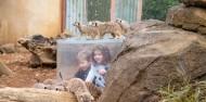 Auckland Zoo - Te Wao Nui - The Living Realm image 5