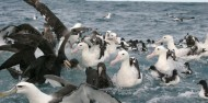 Bird Watching - Albatross Encounter image 2