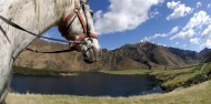 Horse Riding - Ben Lomond Trekking image 8