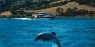 Akaroa Harbour Nature Cruise image 4