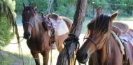 Horse Riding - Cape Farewell Horse Treks image 4
