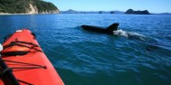 Kayaking - Cathedral Cove Kayak Tours image 7