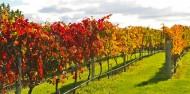 Wine Tours - Napier Wine & Beer Tour image 4