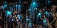 Waitomo Glowworm Caves - Discover Waitomo image 3