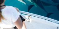 Dolphin & Wildlife Cruise image 6