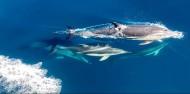 Dolphin & Wildlife Cruise image 9
