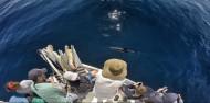 Dolphin & Wildlife Cruise image 10