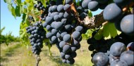 Wine Tours - Hawkes Bay Wine Experience image 1