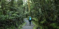 Milford Track Day Walk - Fiordland Outdoors Co image 5