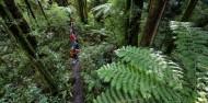 Ziplining - Original Canopy Tour image 4