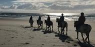 Horse Riding & Wine Tour - Auckland & Beyond Tours image 8