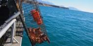 Fishing Trip - Kaikoura Fishing Tours image 6