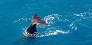 Whale Watching and Scenic Flights - Kaikoura Helicopters image 6
