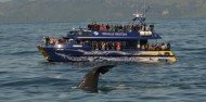Whale Watch image 2