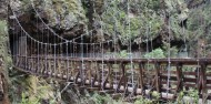 Guided Walks - Discover the Karangahake Gorge image 4