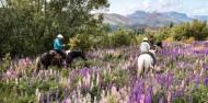Dart River Wilderness Jet & Horse Riding Combo image 2