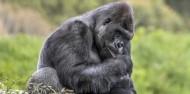 Orana Wildlife Park & Open Range Zoo image 2