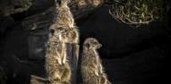 Orana Wildlife Park & Open Range Zoo image 9