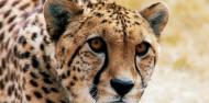 Orana Wildlife Park & Open Range Zoo image 1