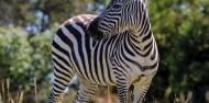 Orana Wildlife Park & Open Range Zoo image 7