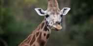 Orana Wildlife Park & Open Range Zoo image 5