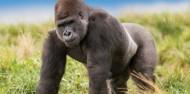Orana Wildlife Park & Open Range Zoo image 10