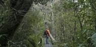 Ulva Island Guided Walk – Rakiura Charters and Water Taxi image 3