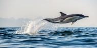 Dolphin & Wildlife Cruise image 3