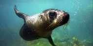 Seal Swim image 1