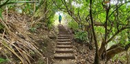 Piha Paradise Sightseeing Tour – Trippy image 5