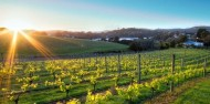 Waiheke Fishing Charter & Wine Tour - Enjoi Wine Tours image 6