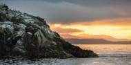 Guided Walk - Stewart Island Experience image 9