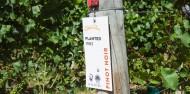 Wine Sampler Tour - Altitude Tours image 5