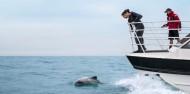 Dolphin Swim - Akaroa Harbour image 3