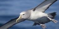 Bird Watching - Albatross Encounter | Kaikoura image 2