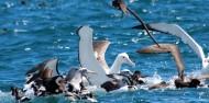 Bird Watching - Albatross Encounter | Kaikoura image 3