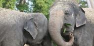 Auckland Zoo - Te Wao Nui - The Living Realm image 6