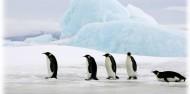 International Antarctic Centre image 7