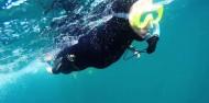 Dolphin Encounter image 6
