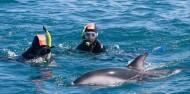 Dolphin Encounter image 5