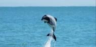 Akaroa Harbour Nature Cruise image 1
