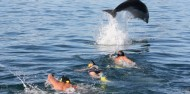Dolphin Swim & Bay of Islands Tour image 2