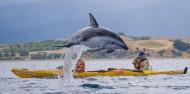 Kayaking - Kaikoura Kayaks image 1