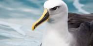 Wildlife Cruises & Tours - Monarch image 6