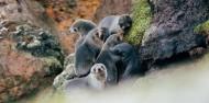 Wildlife Cruises & Tours - Monarch image 5